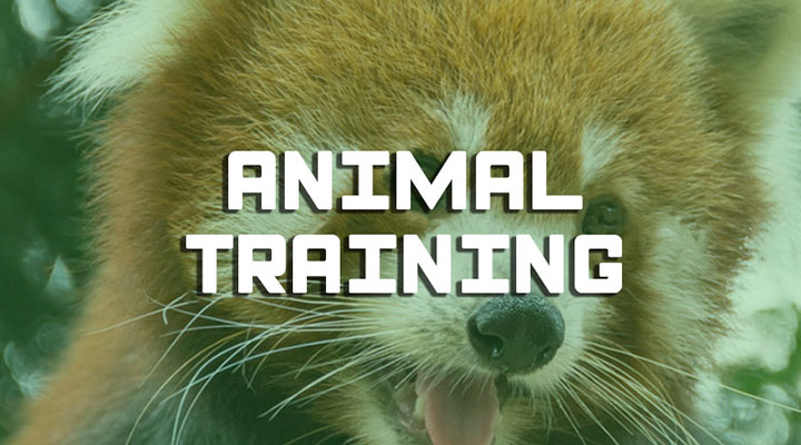Formation animal training zoo